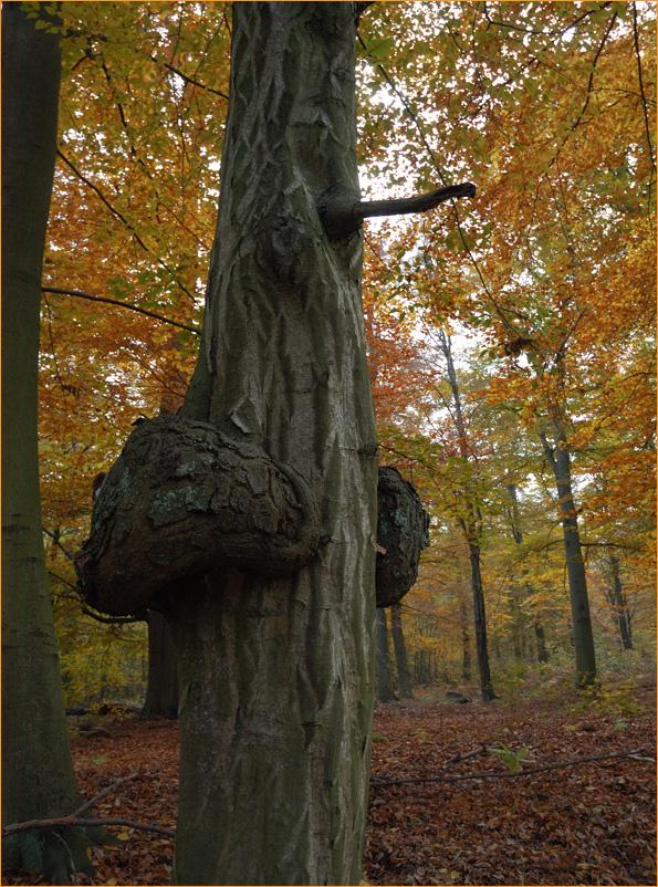 Waldgeist im Herbstwald