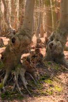 Waldgestalten