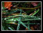 Waldgräser mit Regentropfen