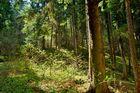 Waldhang2
