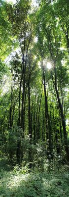 Waldimpessionen
