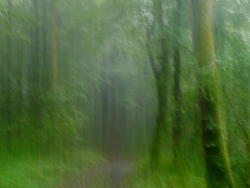 Waldimpression 3