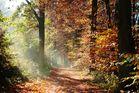 Waldimpression - Herbst