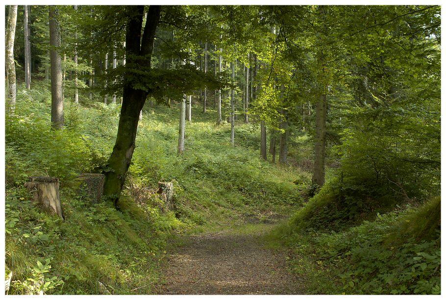 Waldimpressionen ... II