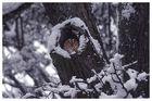 Waldkauz in Baumhöhle
