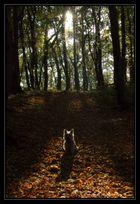 Waldkobold