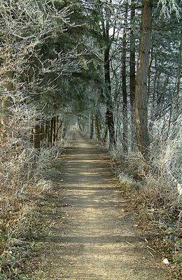 Waldkorridor