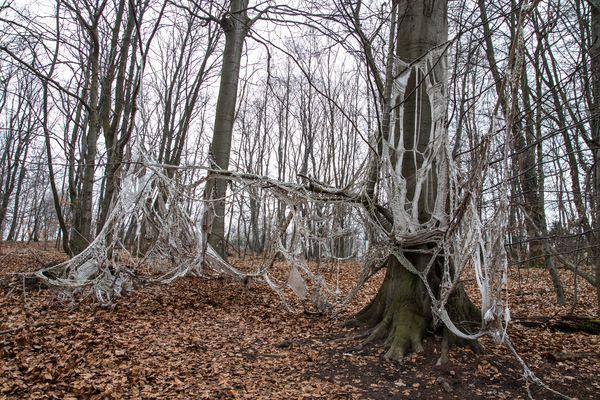 Waldkunst 1