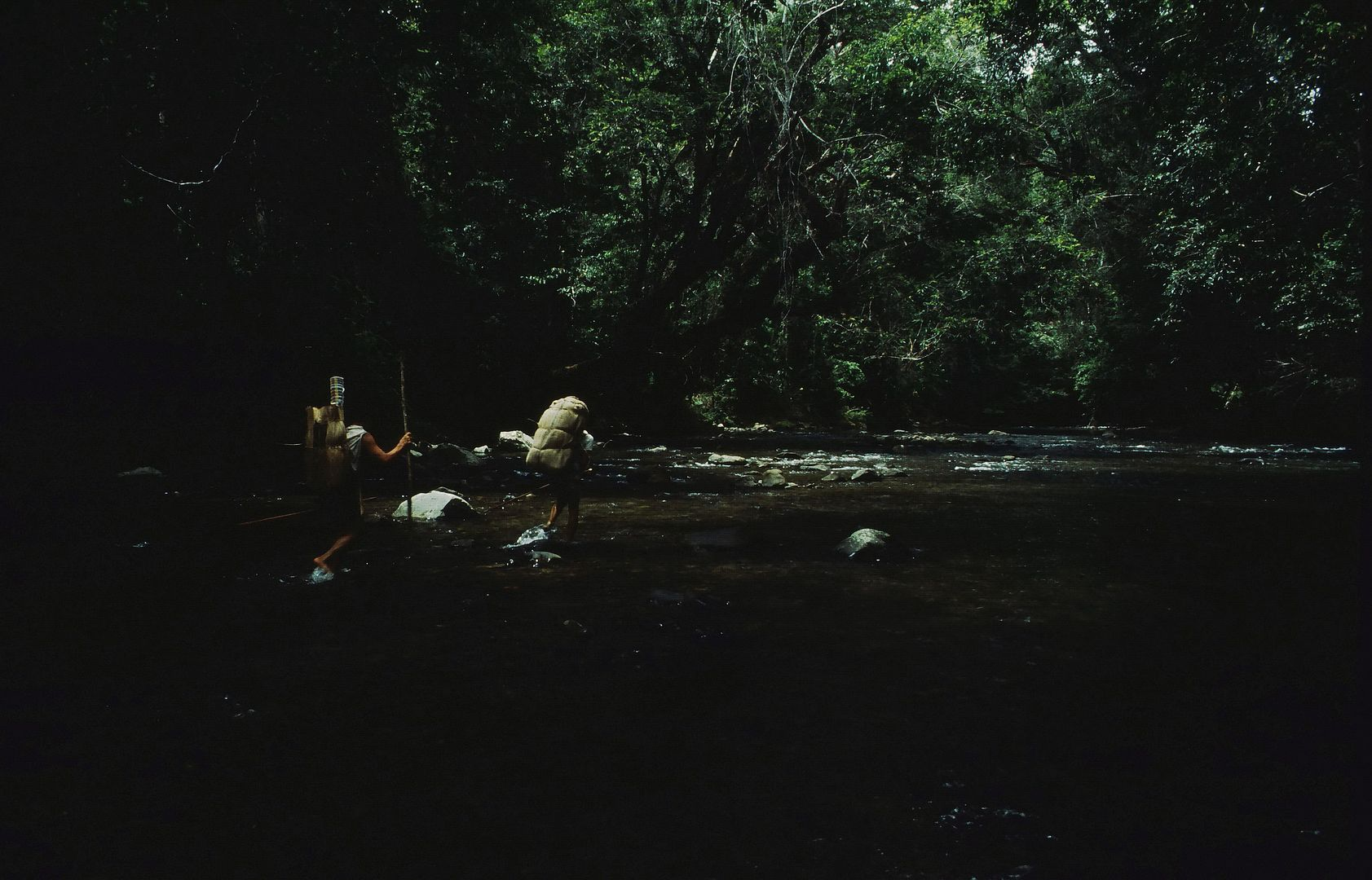 Waldläufer in Ost-Borneo, 1984
