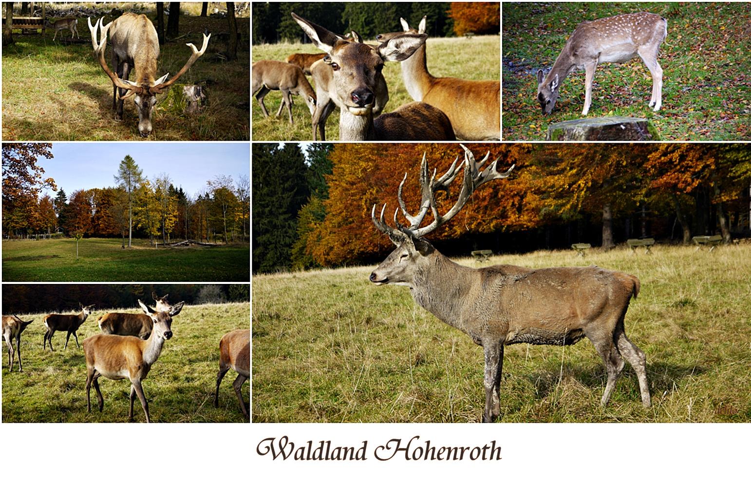 Waldland Hohenroth