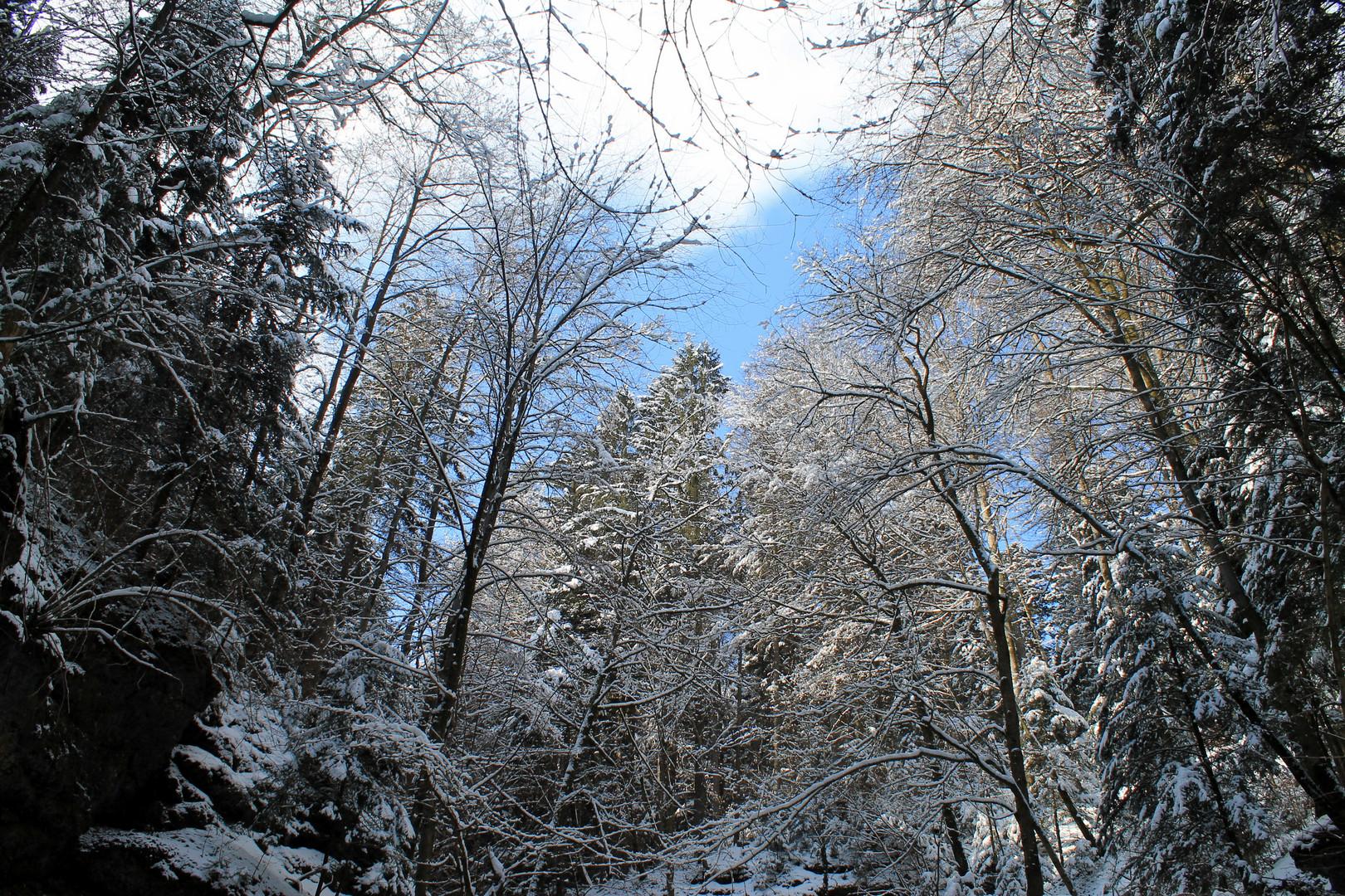 Waldlandschaft im Winter
