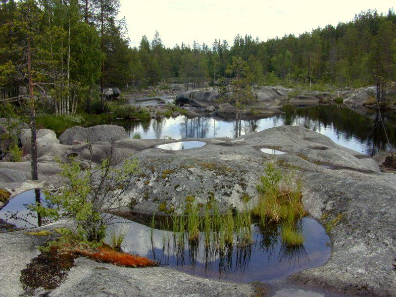 Waldlandschaft in Schweden