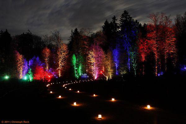 Waldlichter im Wildwald Vosswinkel