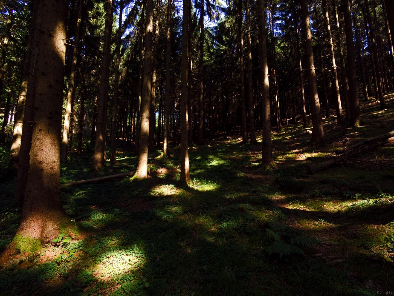 Waldlichtpunkte