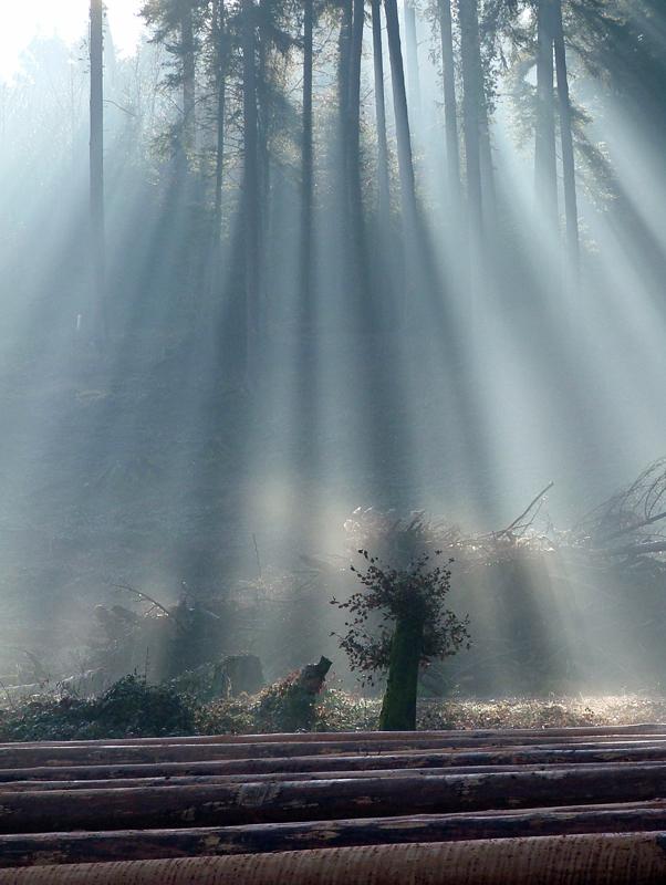 Waldlichtung von Marcel Burckhardt