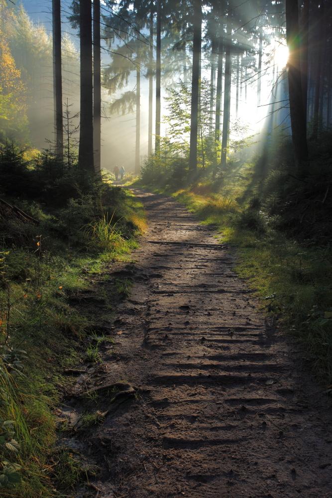 Waldlichtung Foto & Bild | deutschland, europe, sachsen ...
