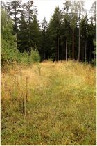 Waldlichtung im August