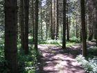 Waldlichtung im Bayerischen Wald