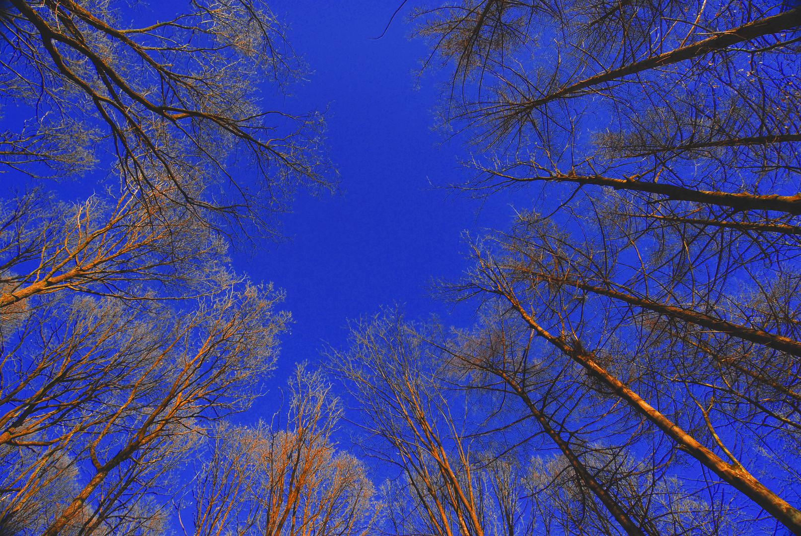Waldlichtung noch ohne Blätter ...