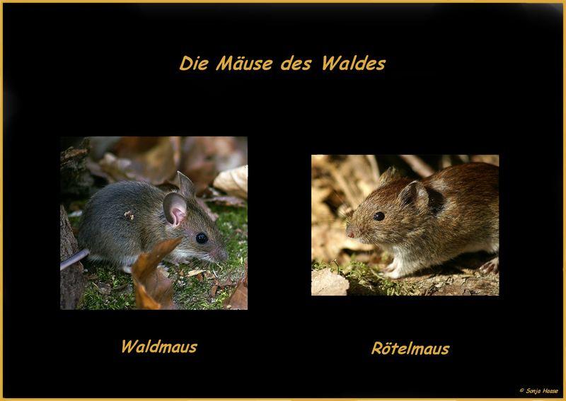 Waldmodels