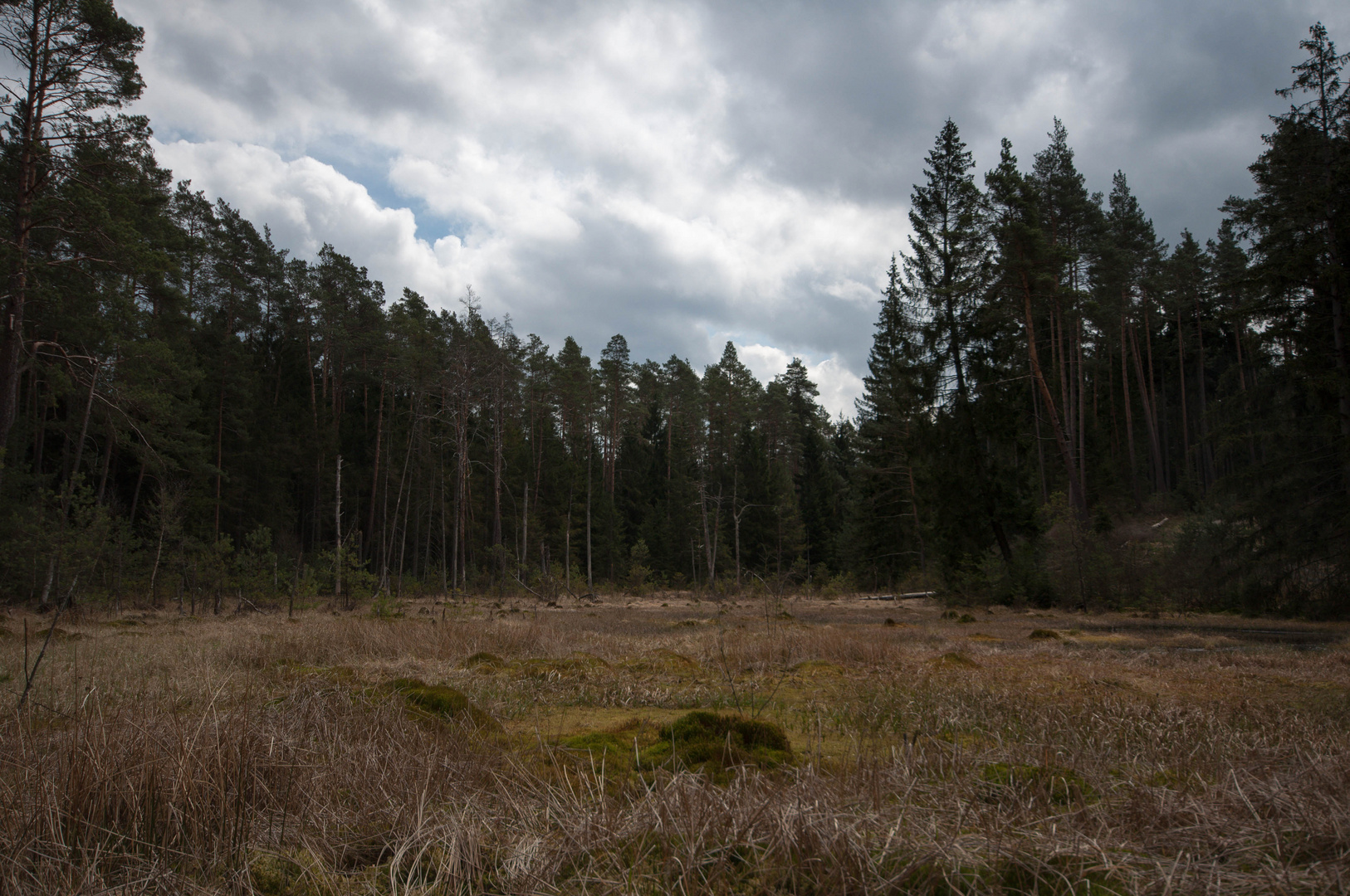 Waldmoor im Staatswald vom FoA Burgwald
