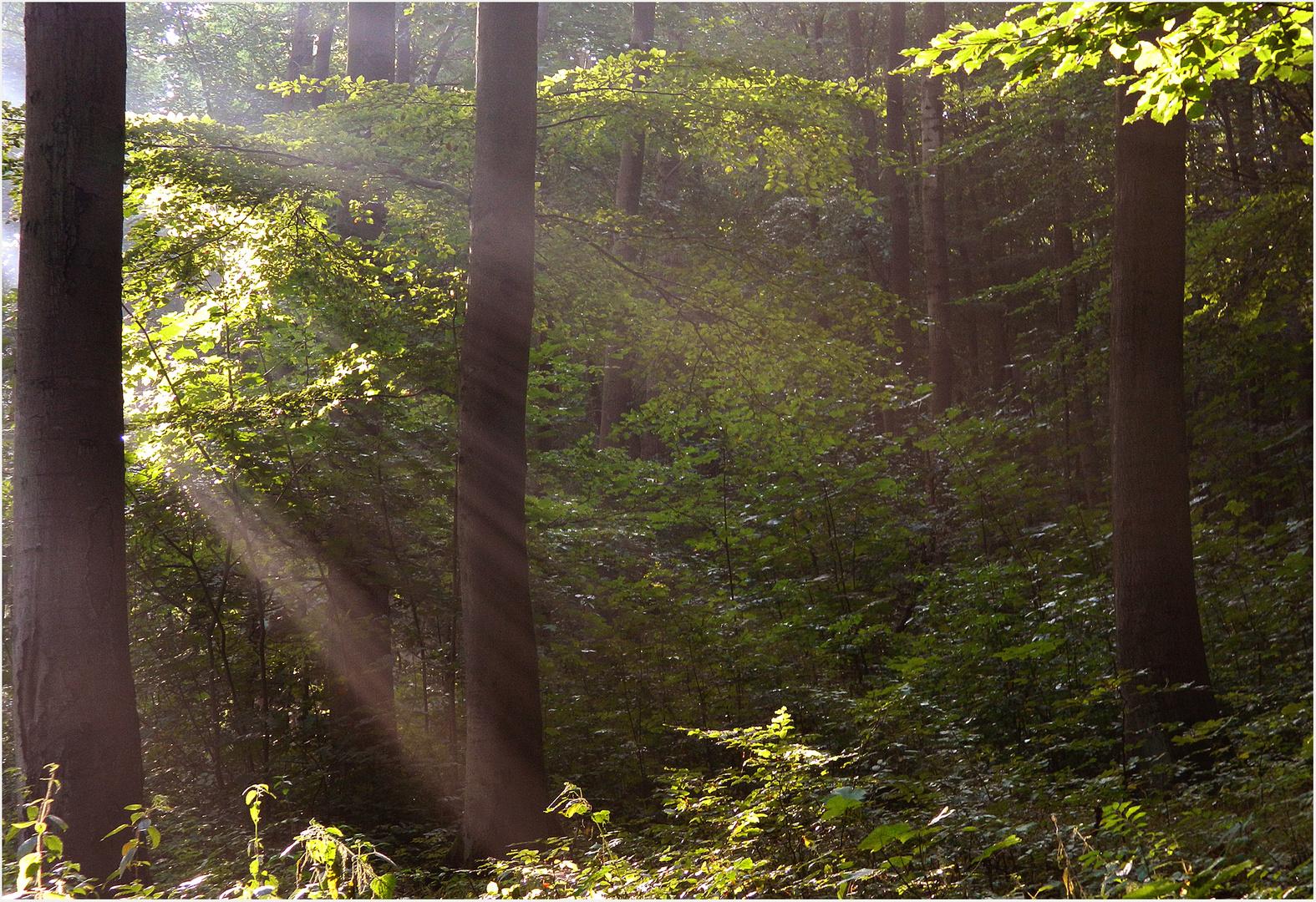 Waldmorgen 3