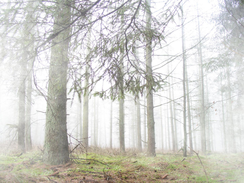 Waldnebel