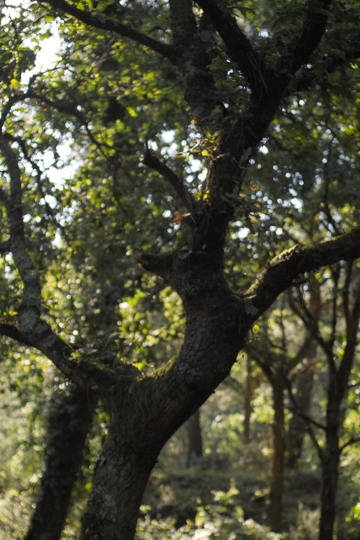 Waldnymphe von Brocéliande