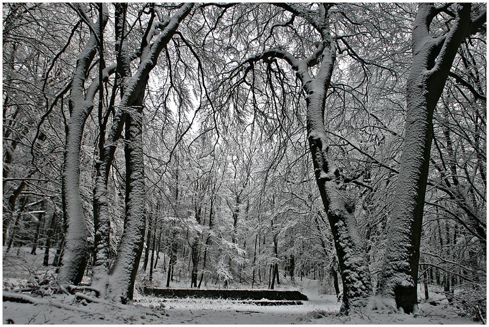 Waldpark Semper