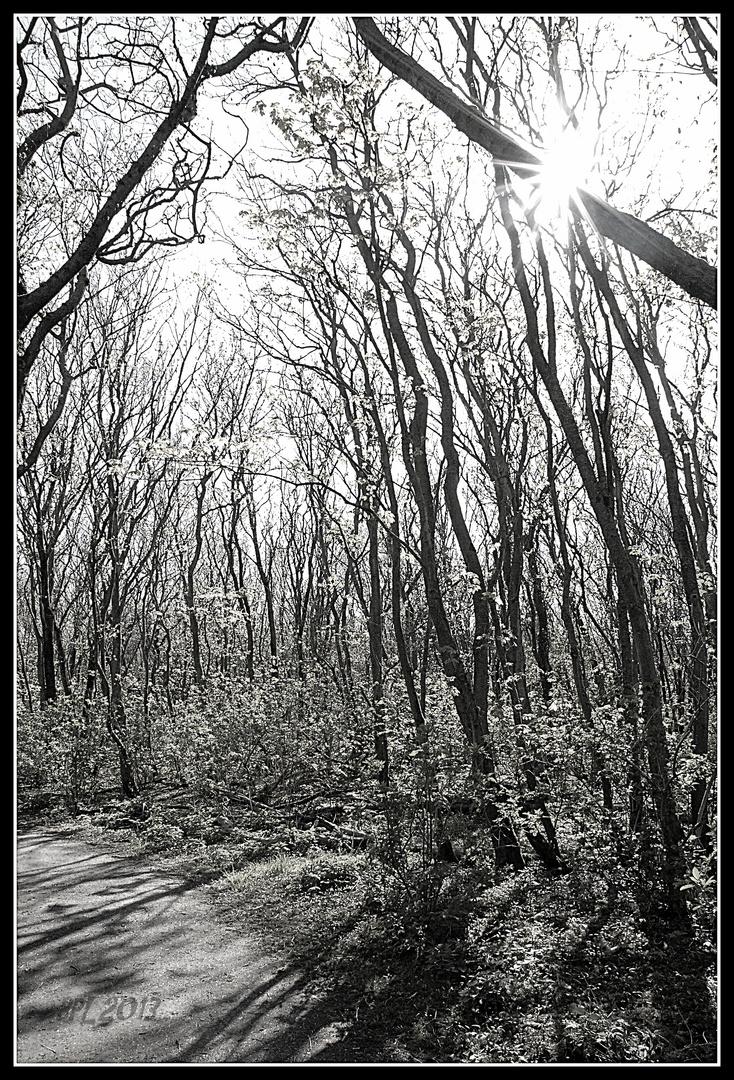 """""""Waldpfade"""""""
