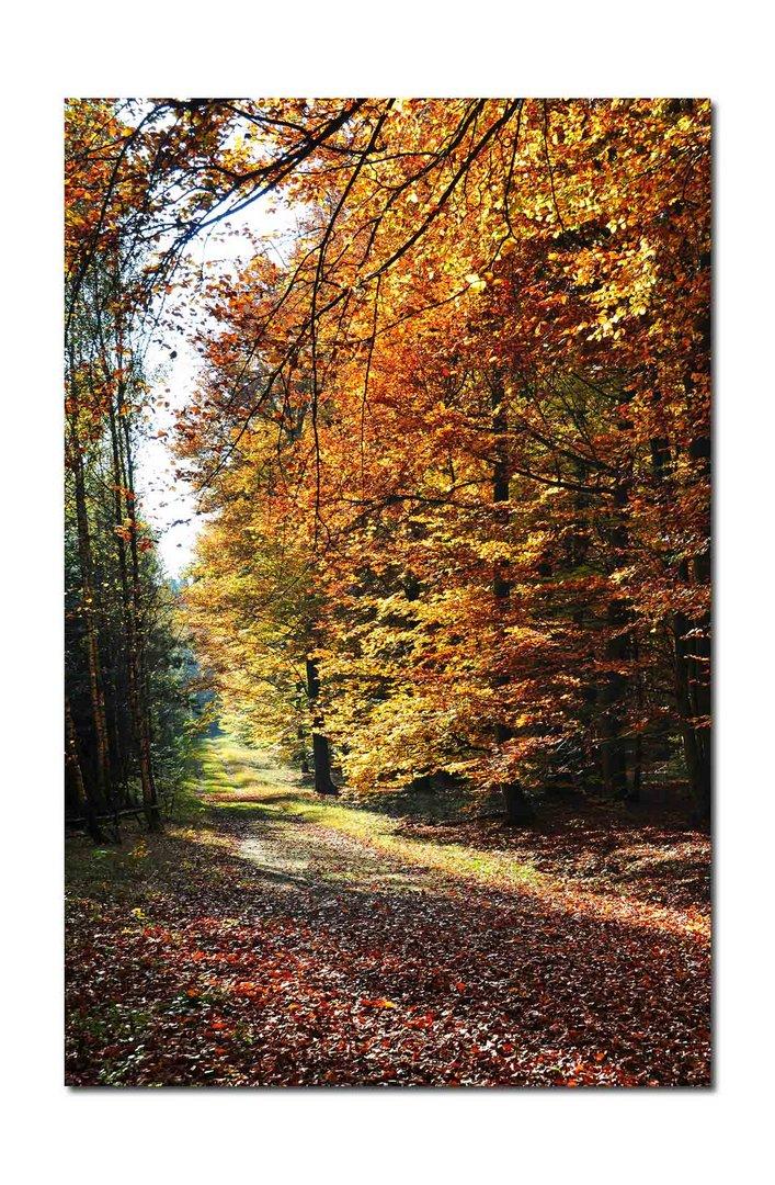 Waldpfade im Herbst