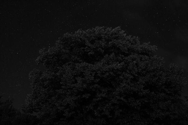 Waldrand bei Mitternacht