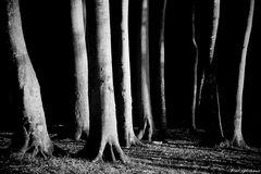 Waldrand im Abendlicht