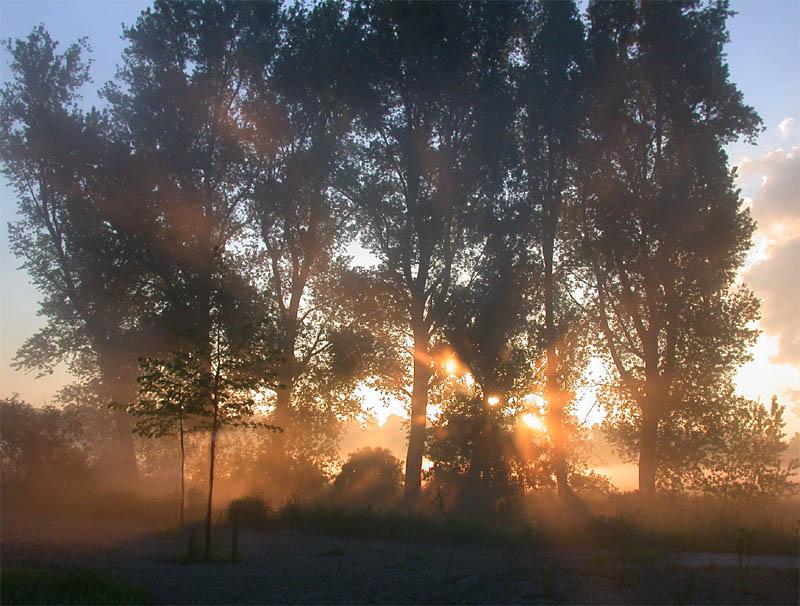 Waldrand im Morgennebel... von Hans Aussem