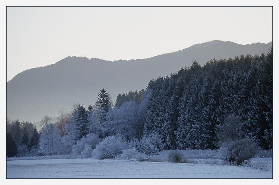 Waldrand im Winterkleid