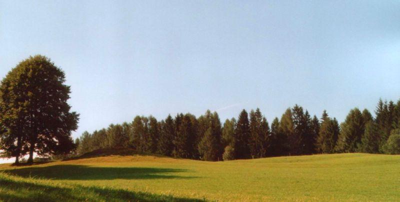 Waldrand in der Südsteiermark