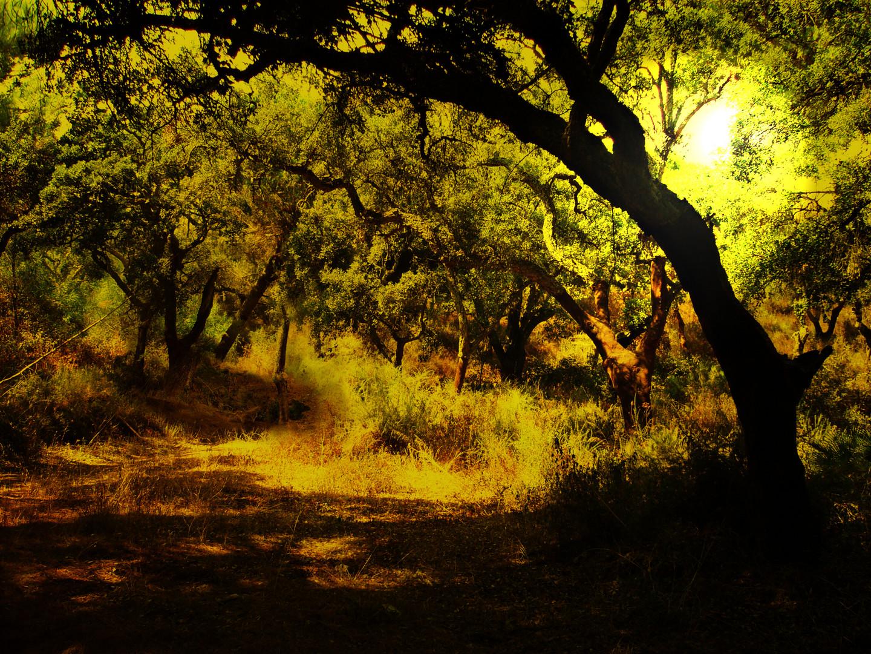 Waldreste in Andalusien