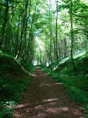 Waldschlucht