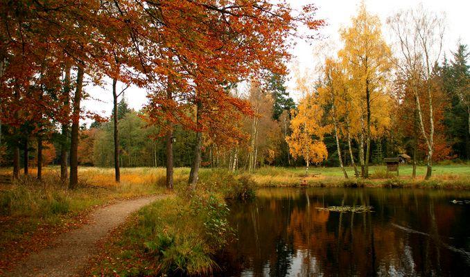 Waldsee Herbst