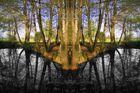 Waldsee im Spiegel