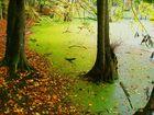 Waldsee unter Laubbäumen