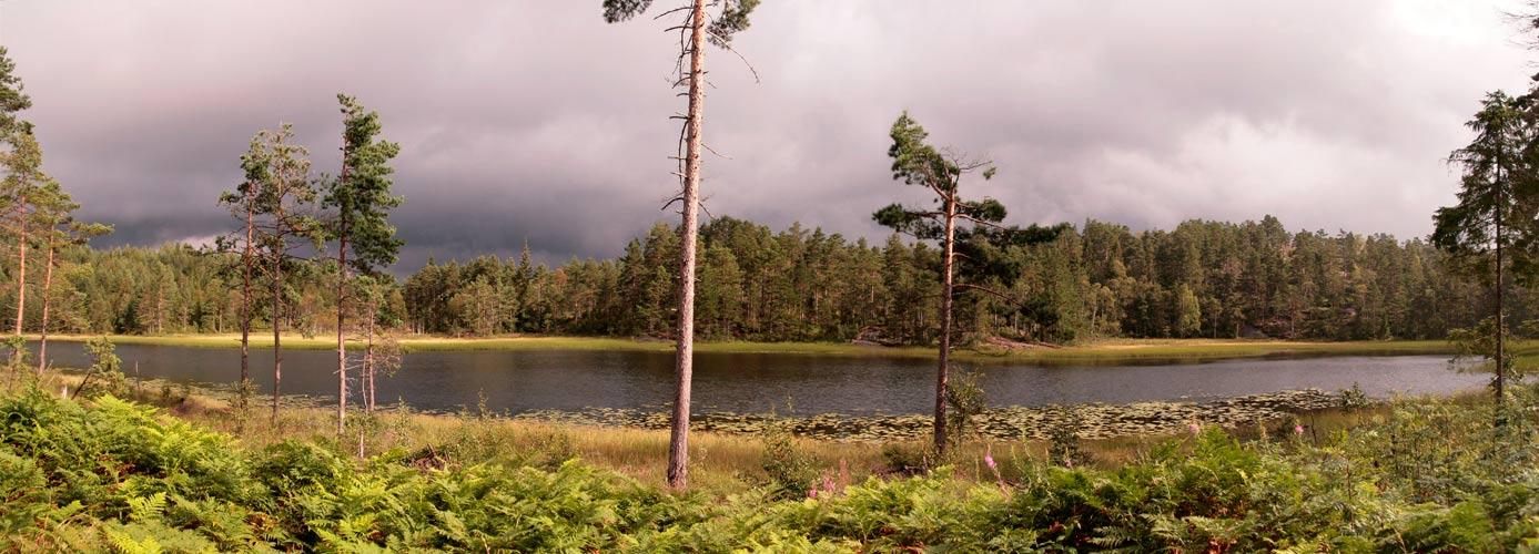 Waldseepanorama