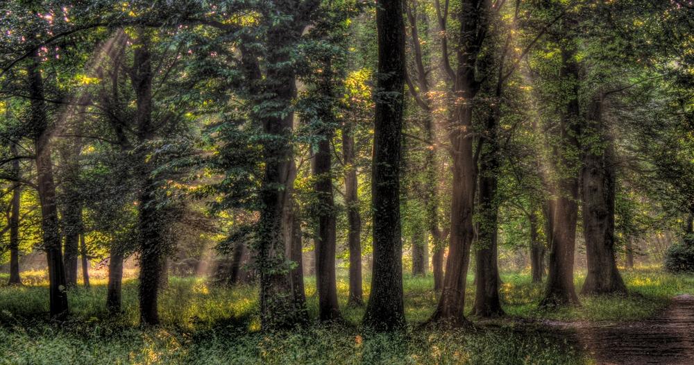 Waldseepark 1