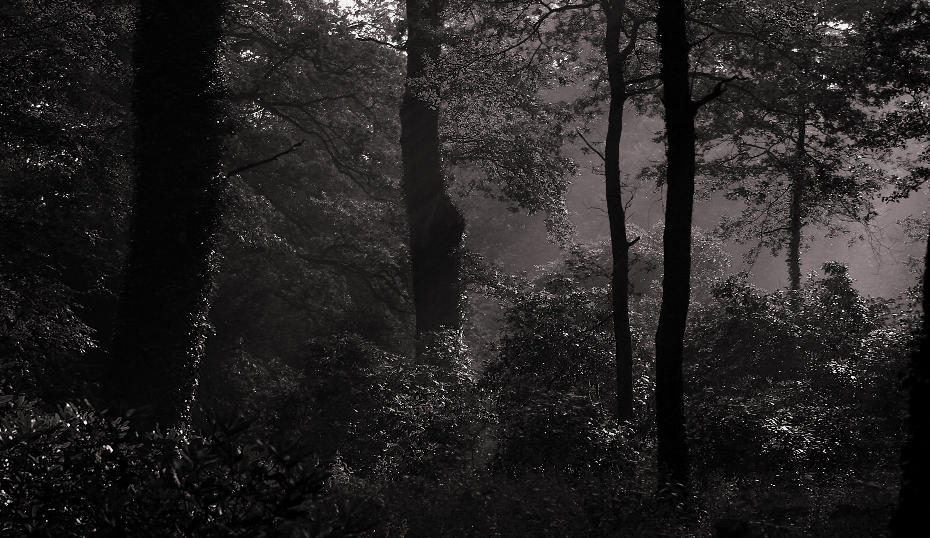 Waldseepark mono