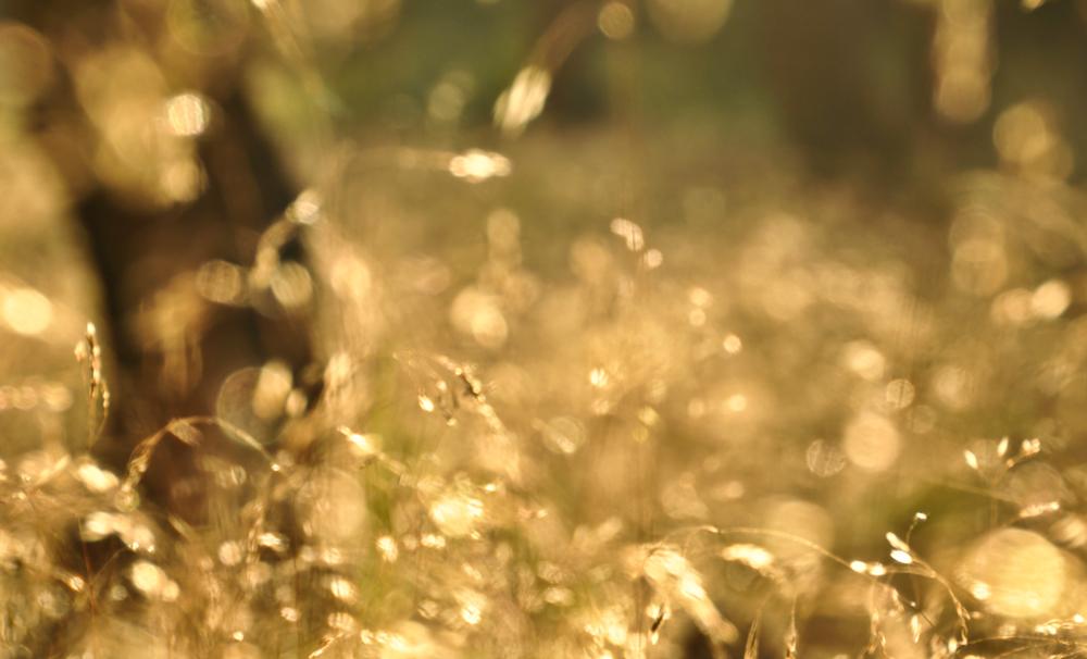 wald.sommer.licht