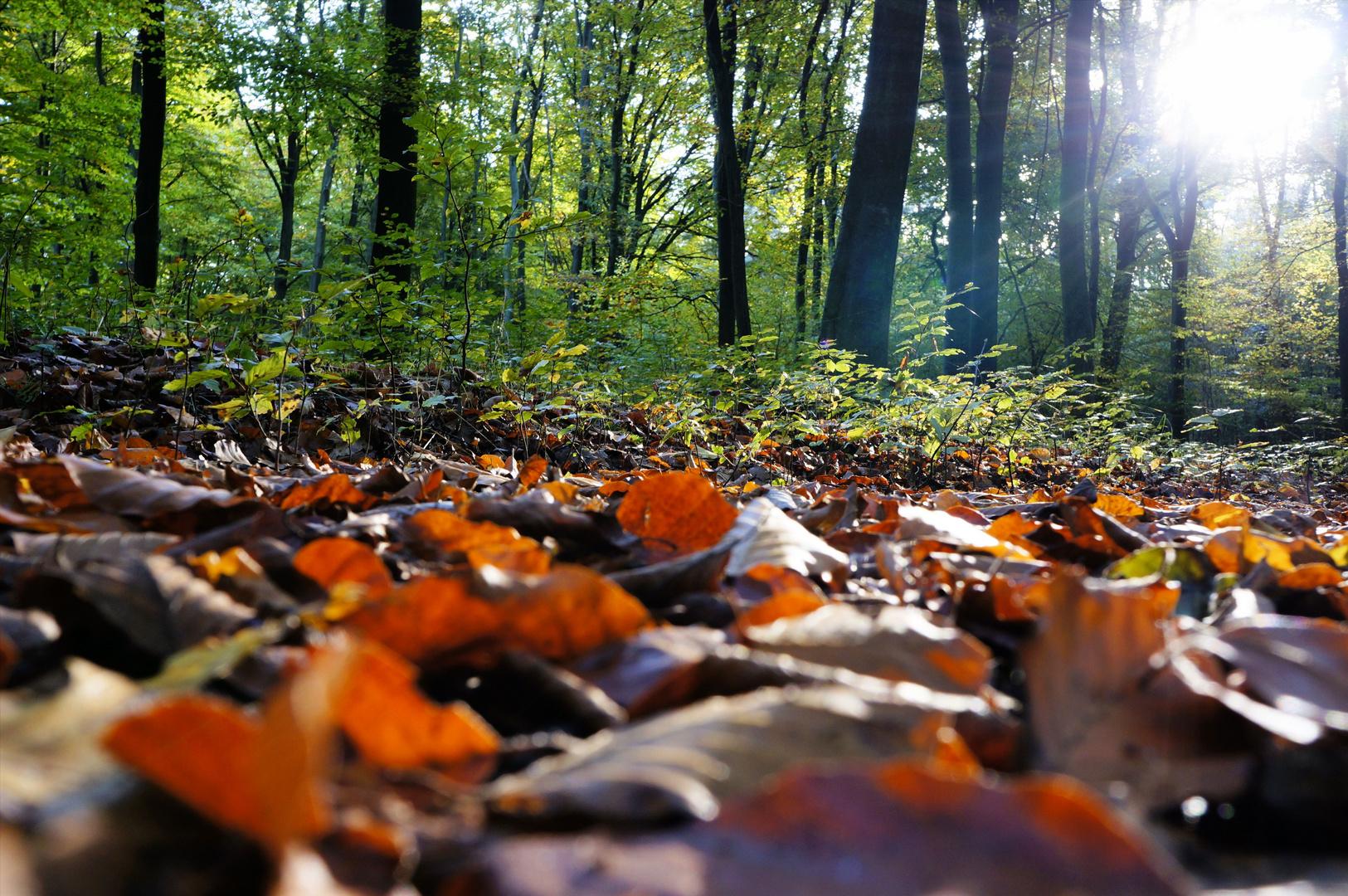 Waldspaziergang 2