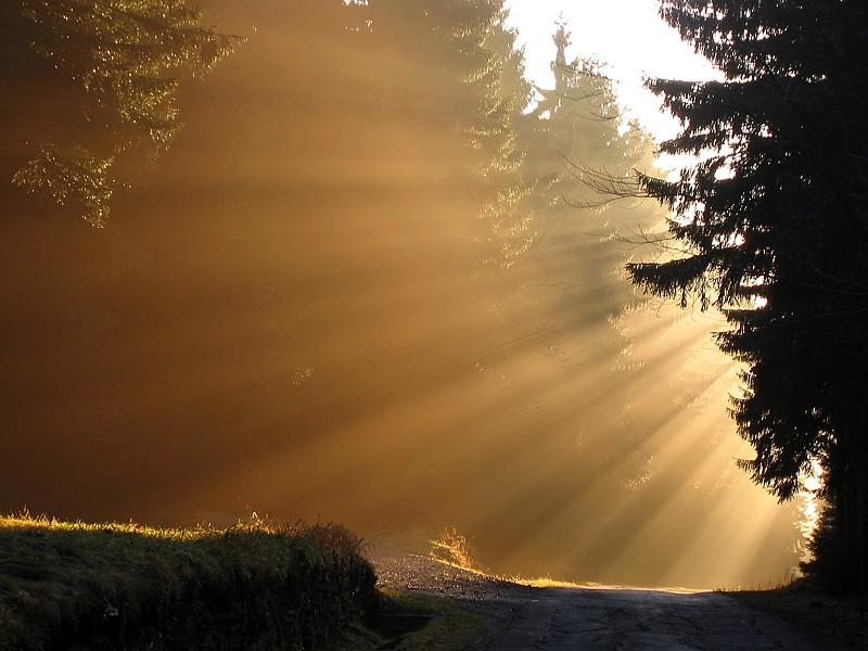 Waldspaziergang 23.11.2002 Bild 2
