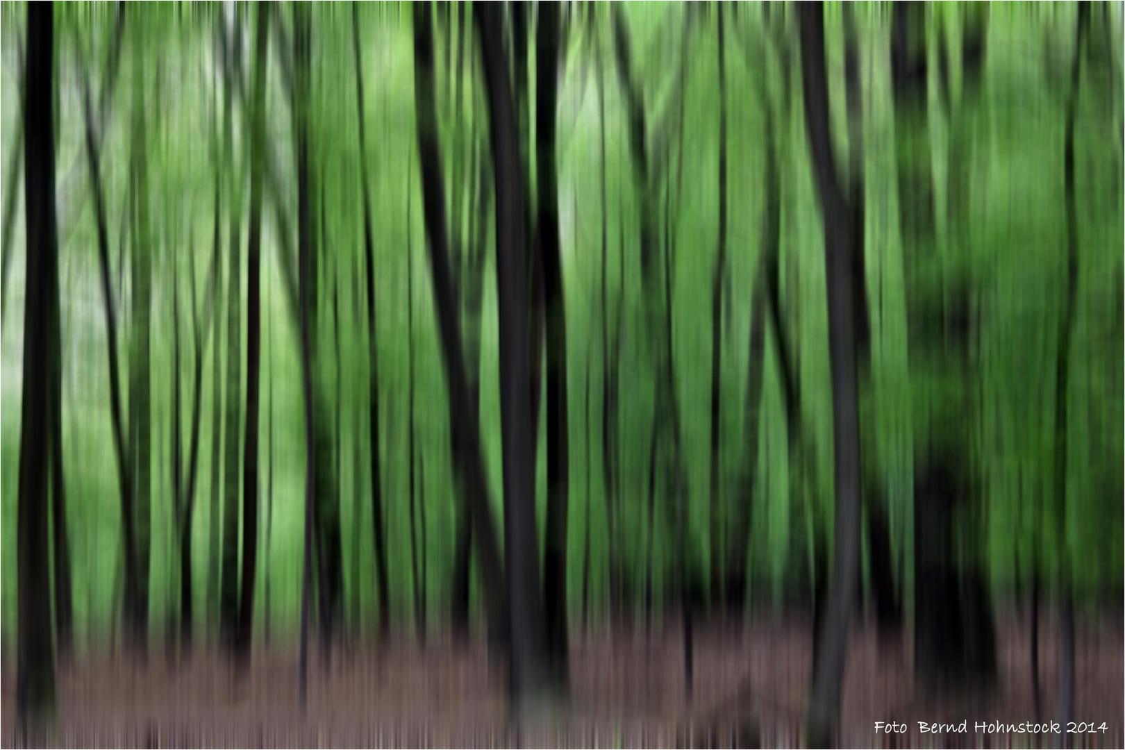 Waldspaziergang ......