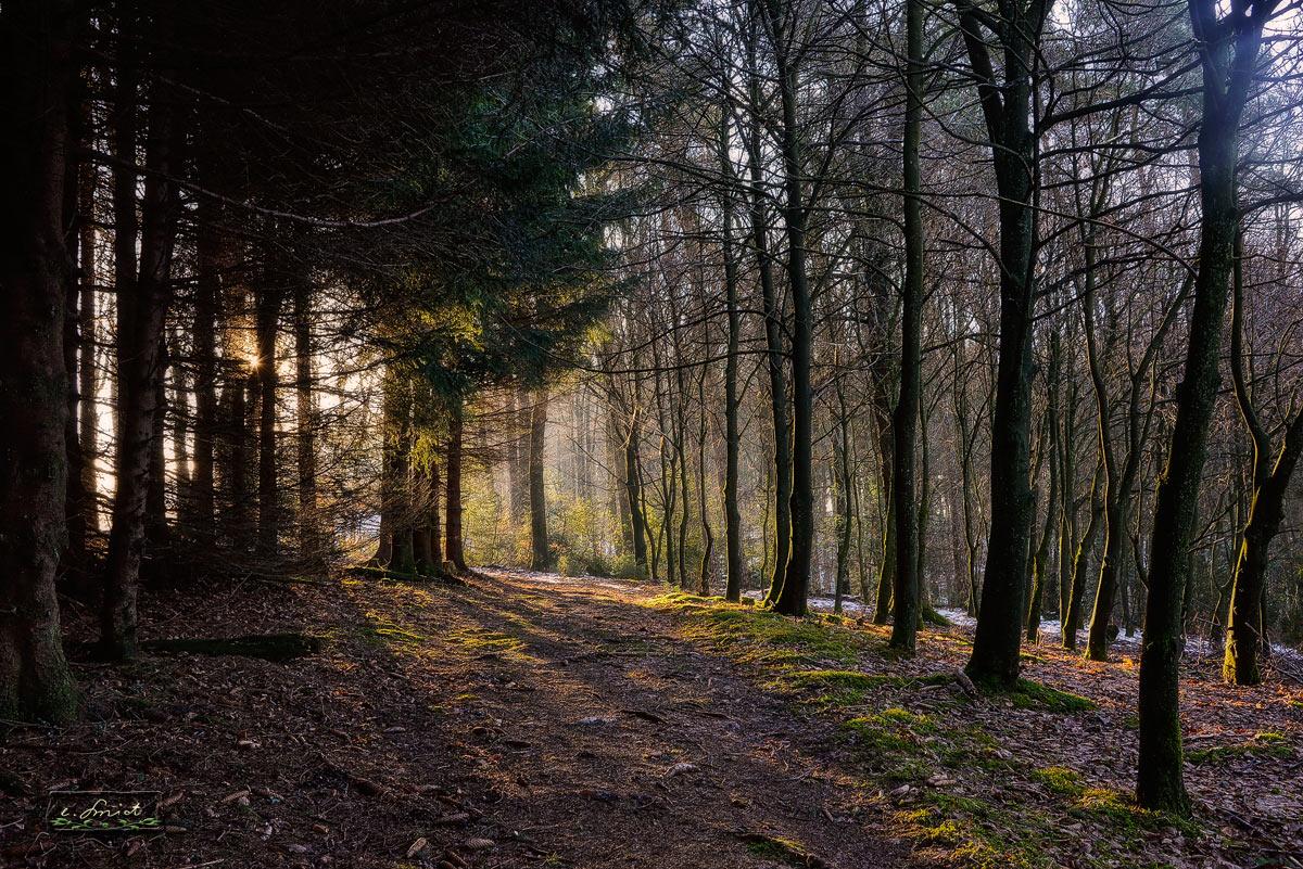 Waldspaziergang früh am Morgen