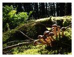 Waldspaziergang I....